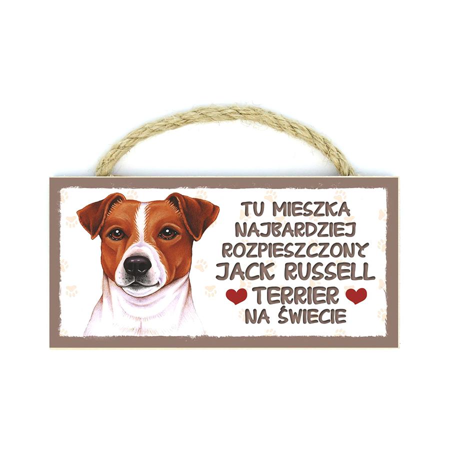 21 Jack Russell Terrier