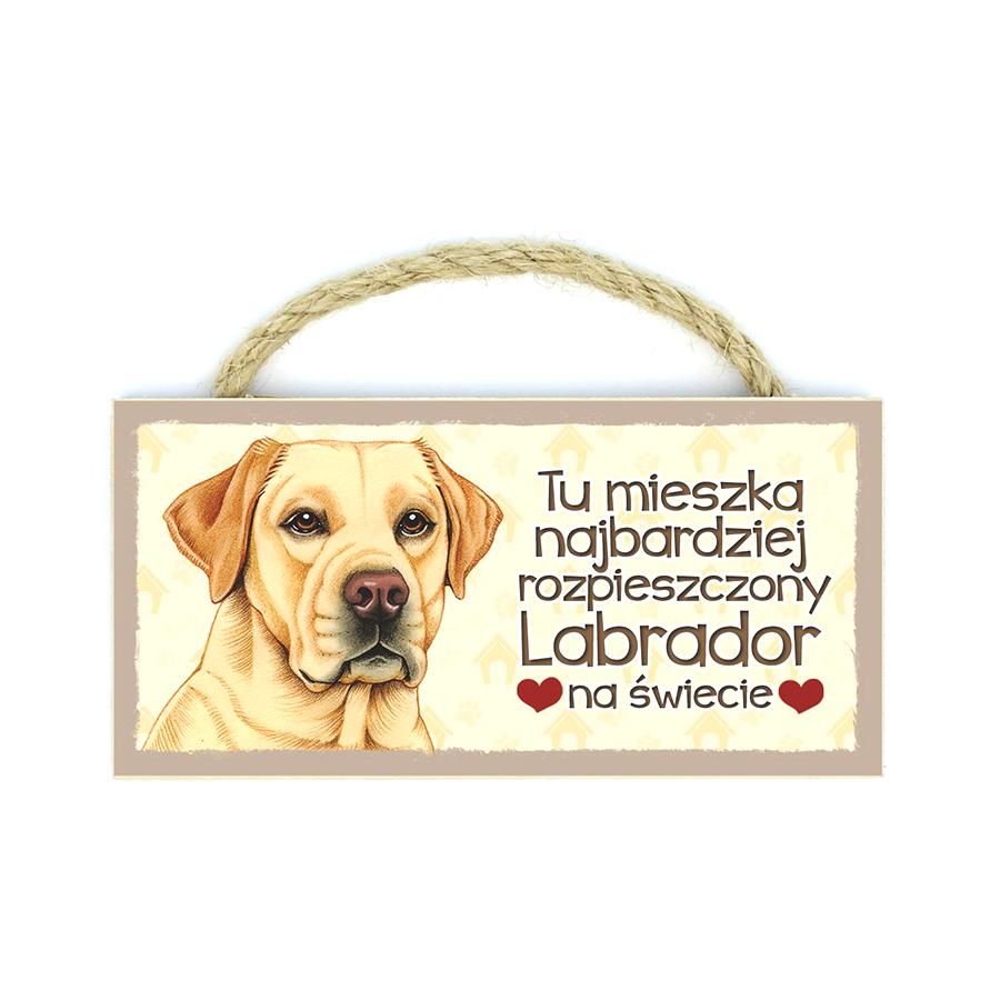 25 Labrador Biszkopt (Tu Mieszka Najb…)