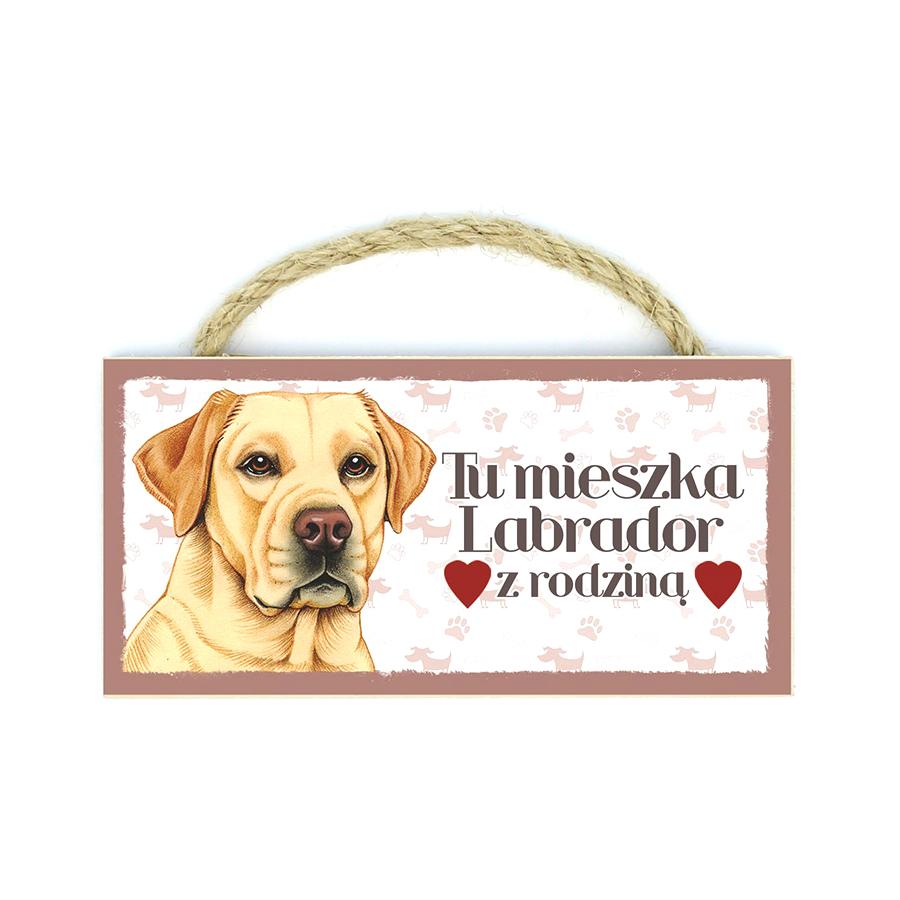 26 Labrador Biszkopt (Tu Mieszka Lab...)