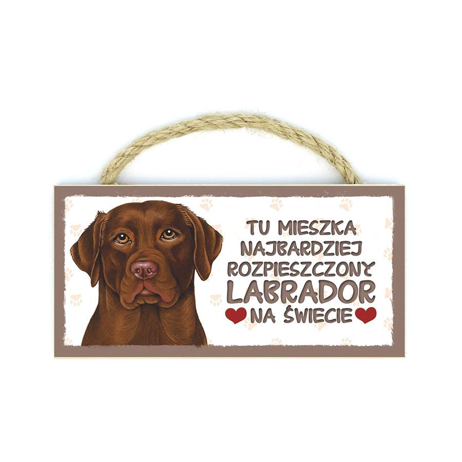28 Labrador Brązowy