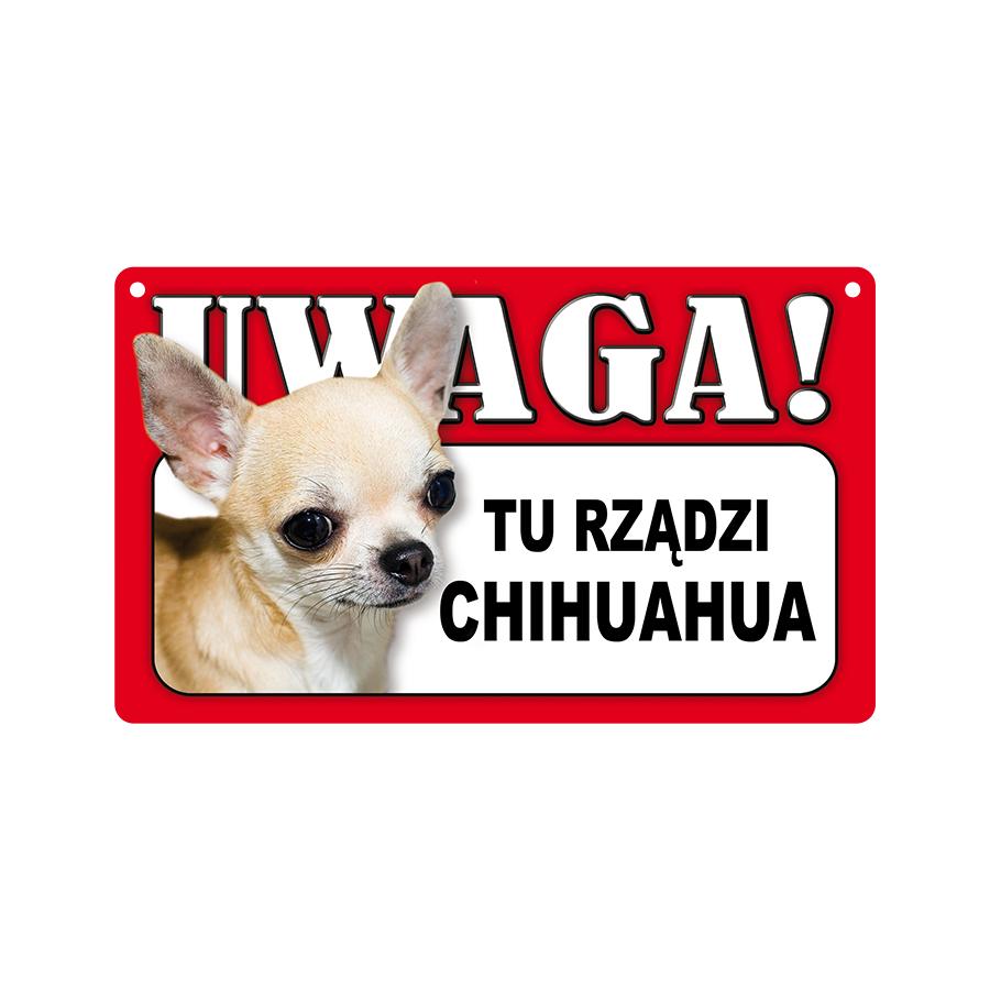 11 Chihuahua