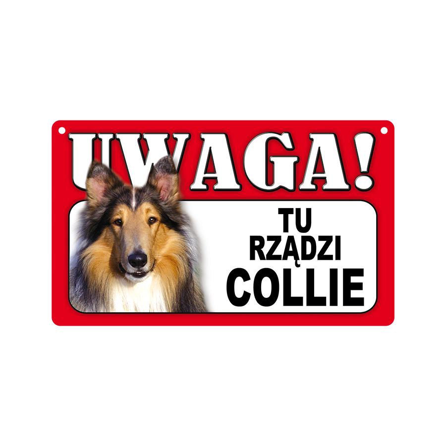 14 Collie