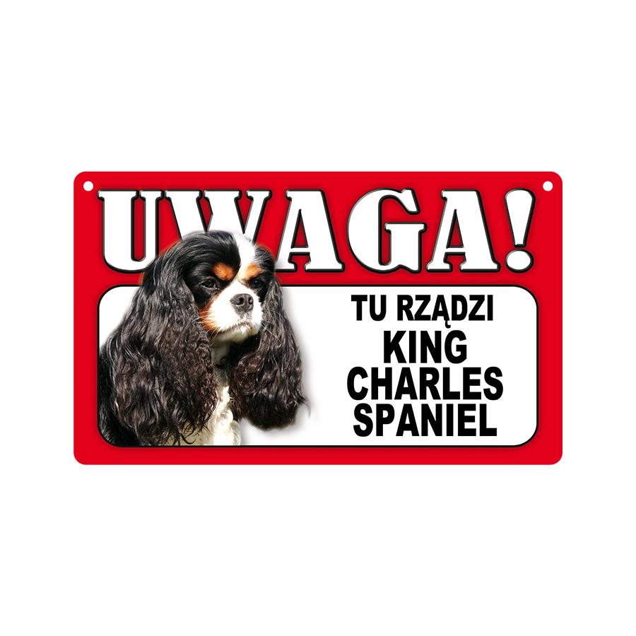 21 King Charles Spaniel