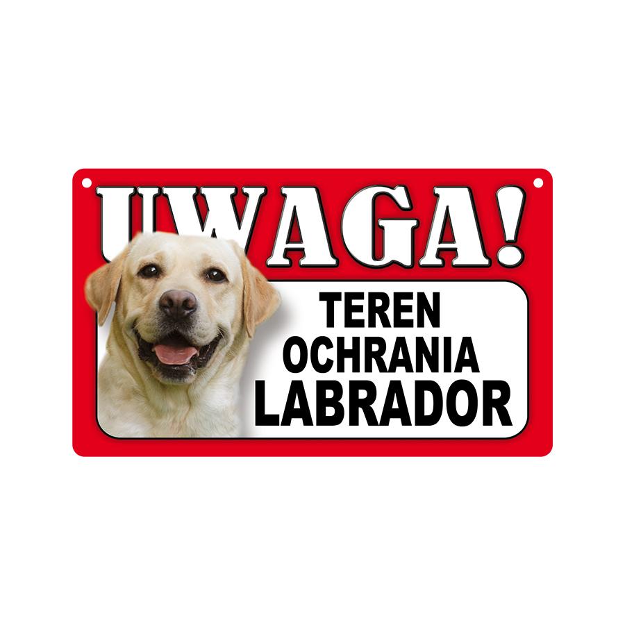 22 Labrador