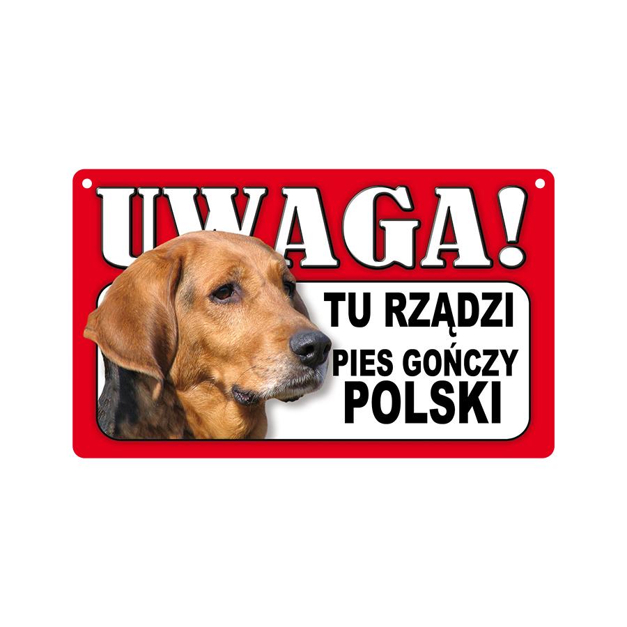 31 Pies Gończy Polski