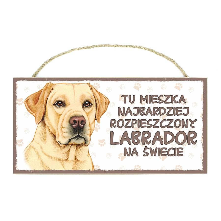 24 Labrador Biszkopt (Tu Mieszka...)