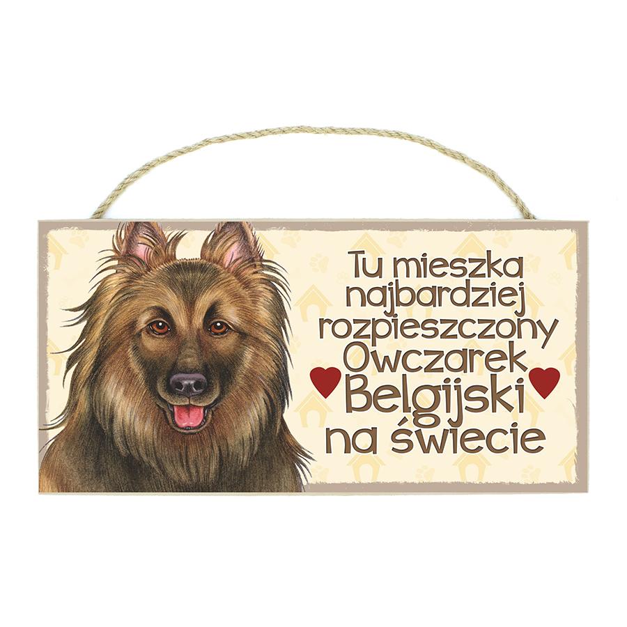 31 Owczarek Belgijski