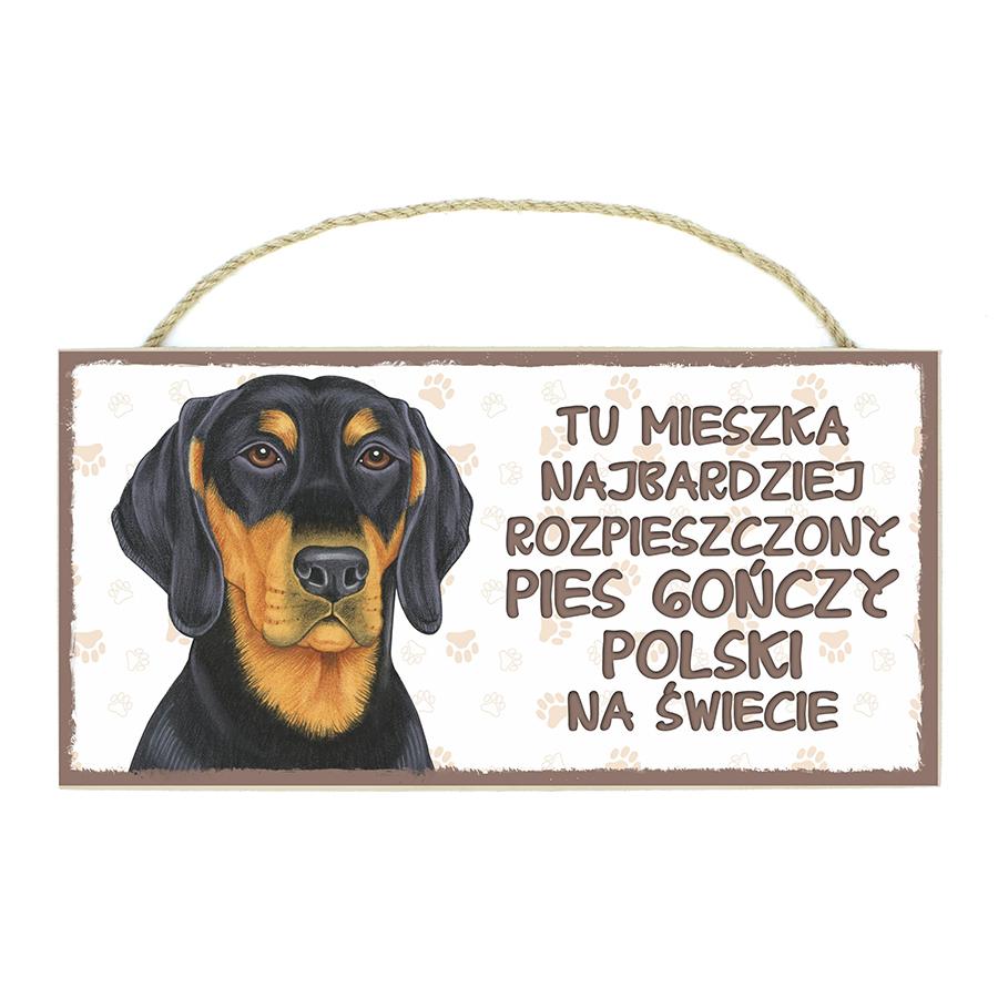 36 Pies Gończy Polski